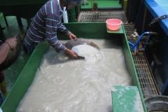 Offshore Tin Mining